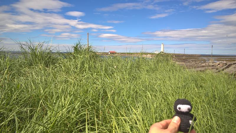 Neumel versteckt sich im Gras vor Grótta