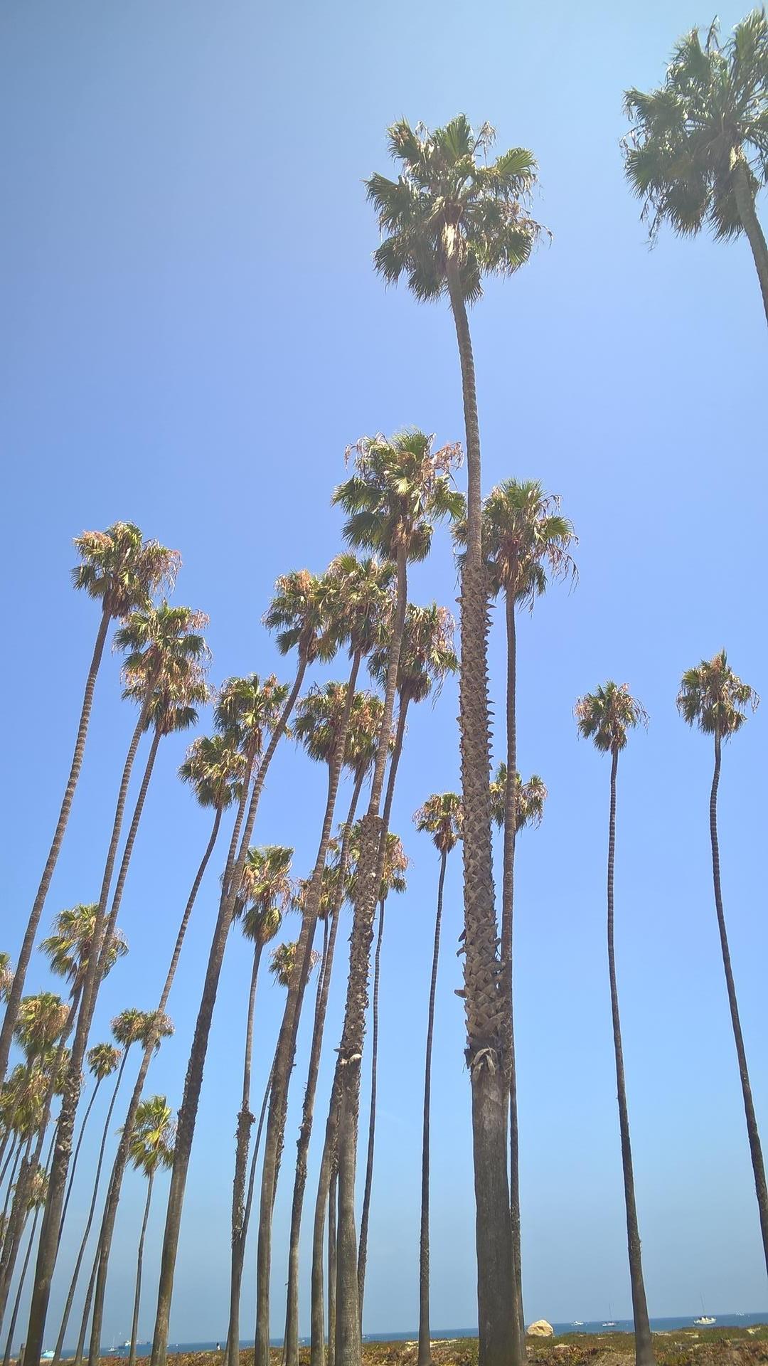 In Santa Barbara am Strand...