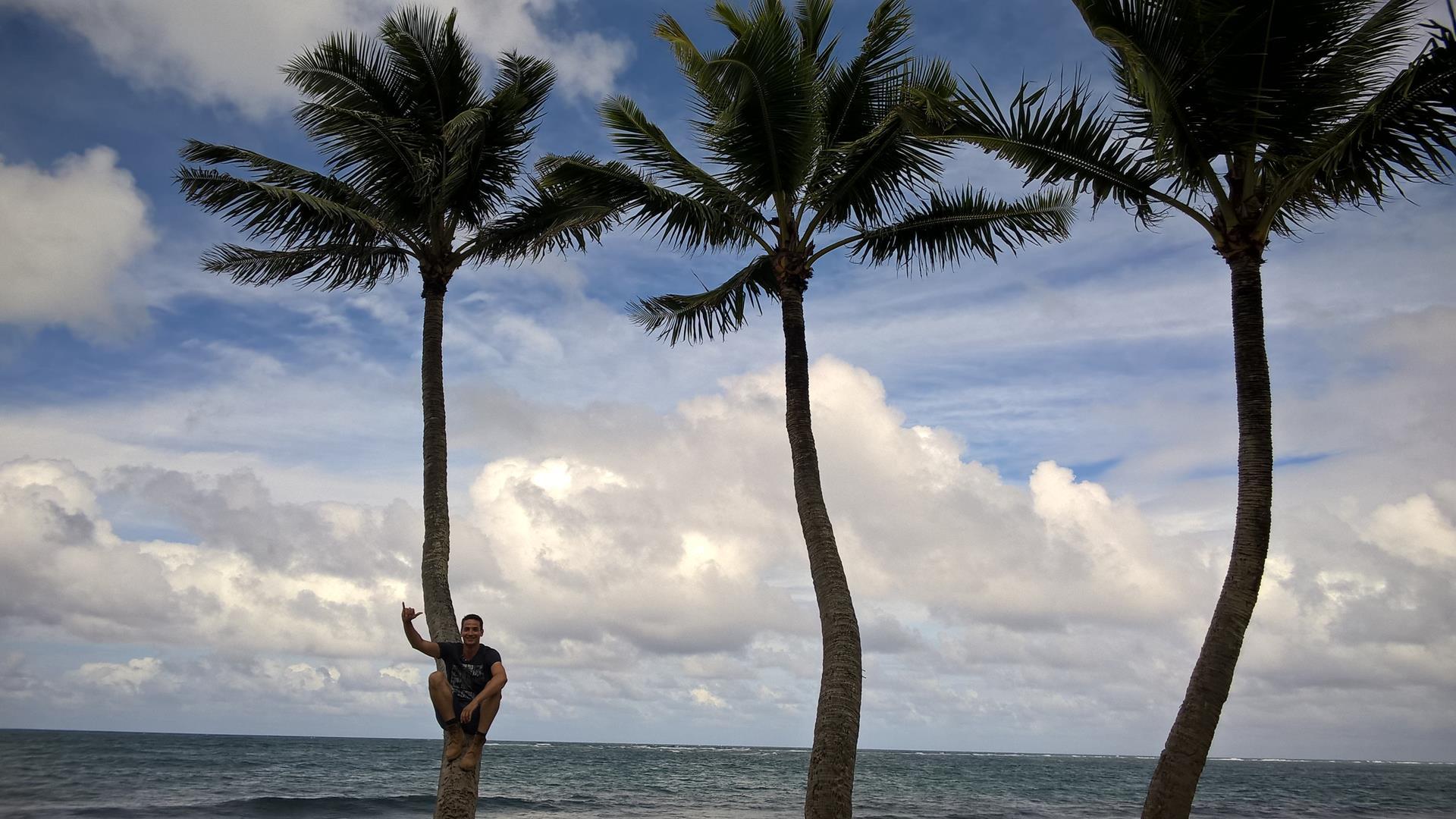 Ich hab keine drei Affen gefunden, aber dafür drei Palmen