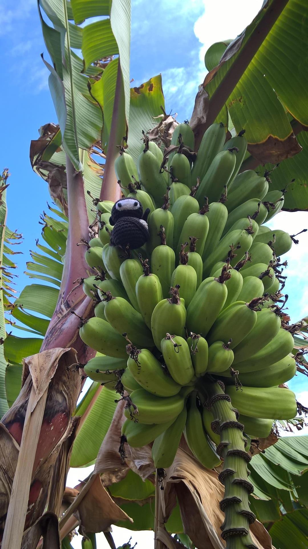 Hidden in the Banana: Ein Ninja kann in jegleicher Umgebung verschwinden
