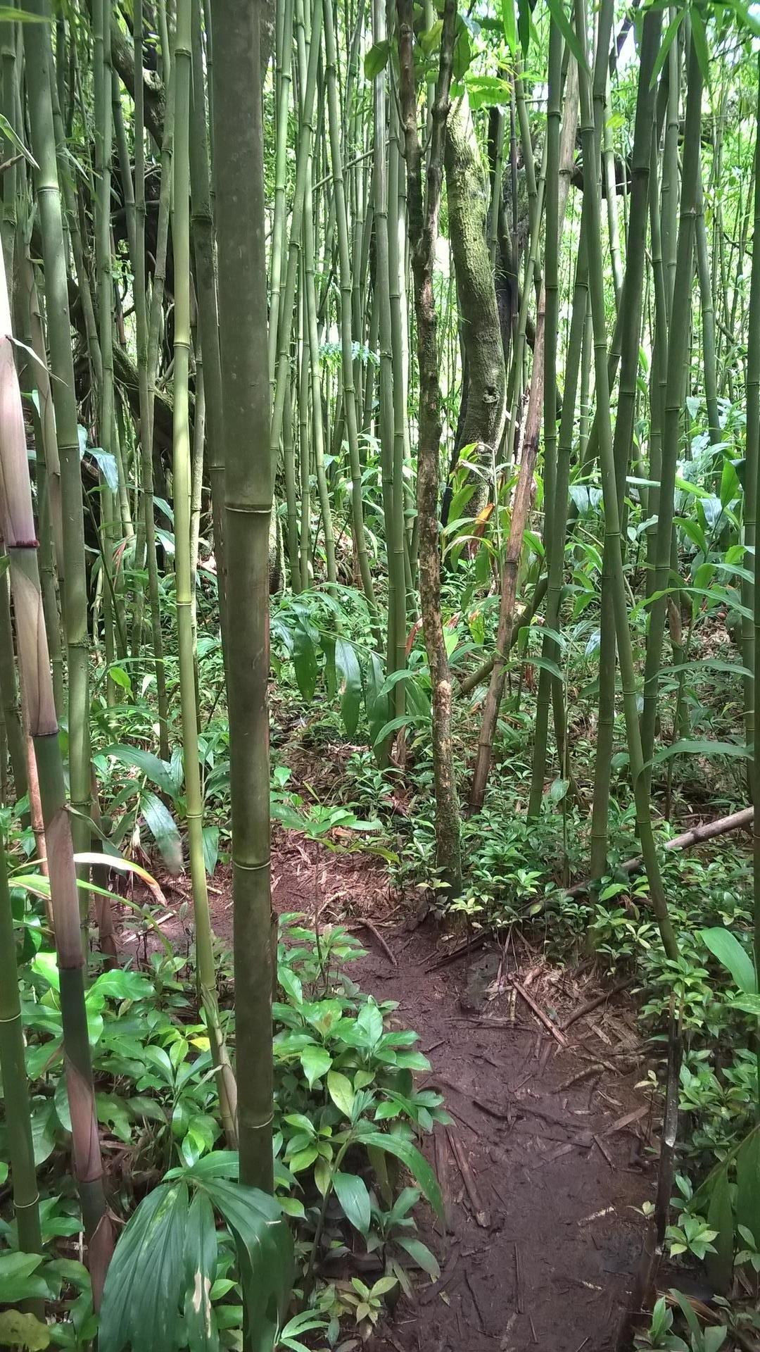 Auf solchen Pfaden ging es durch den Regenwald