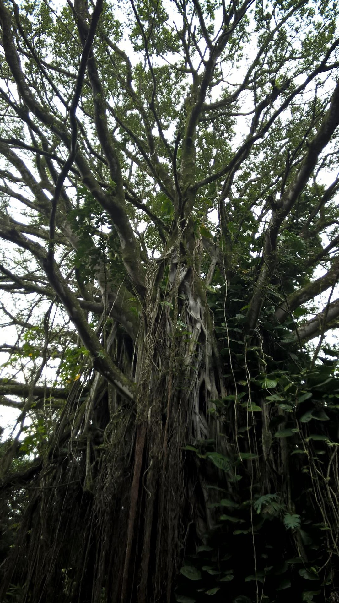 Noch ein Baum