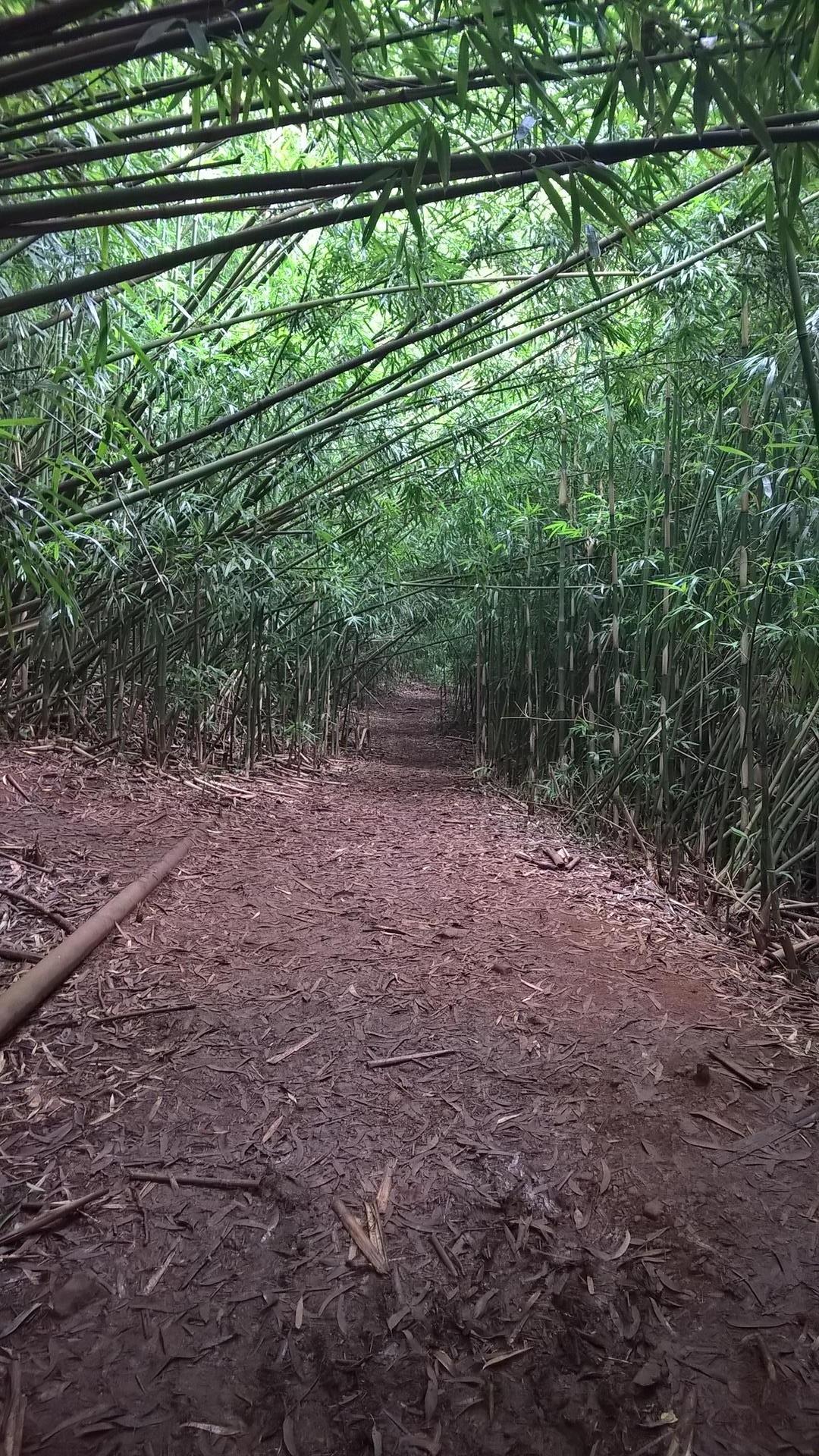 Wieder durch den Bambus