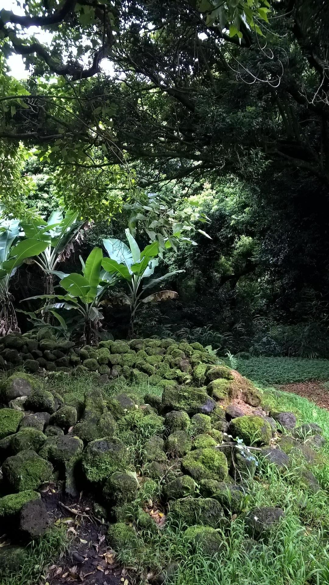 Die Natur holt sich hier alles wieder zurück