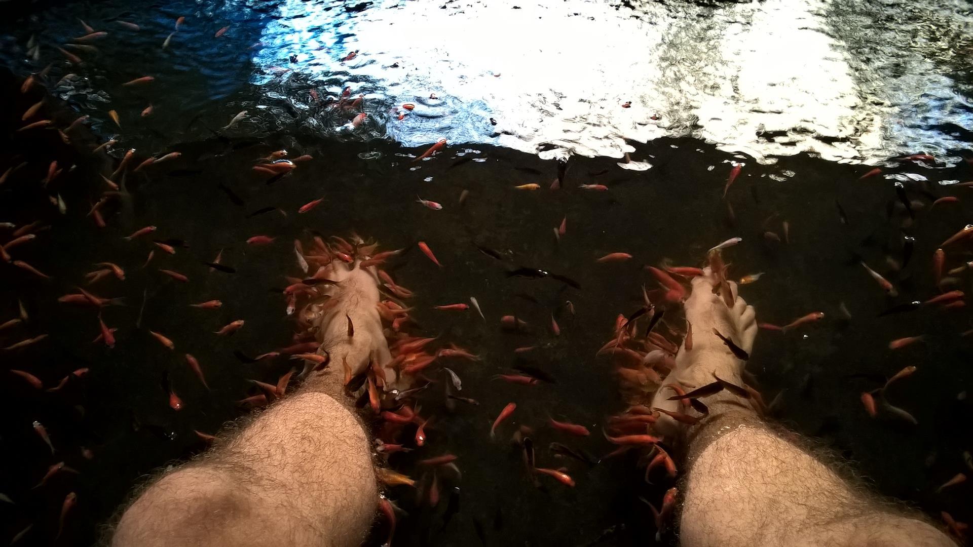 ... nachdem diese kleinen Fische meine Füße anknappern