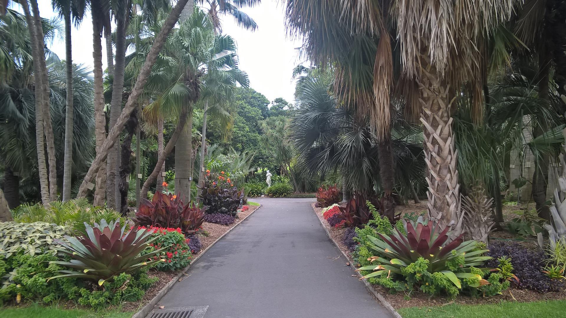 Der royale botanische Garten in Sydeny