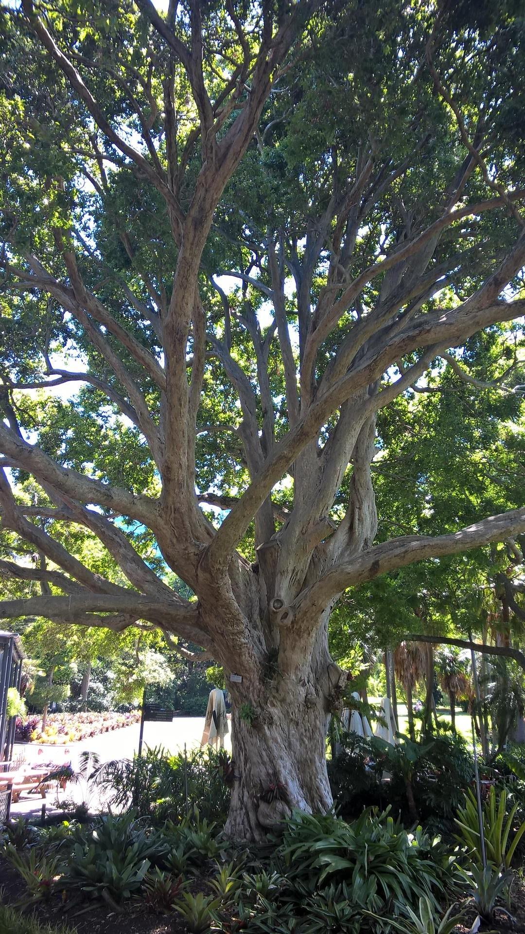 ... königlichen botanischen Garten...