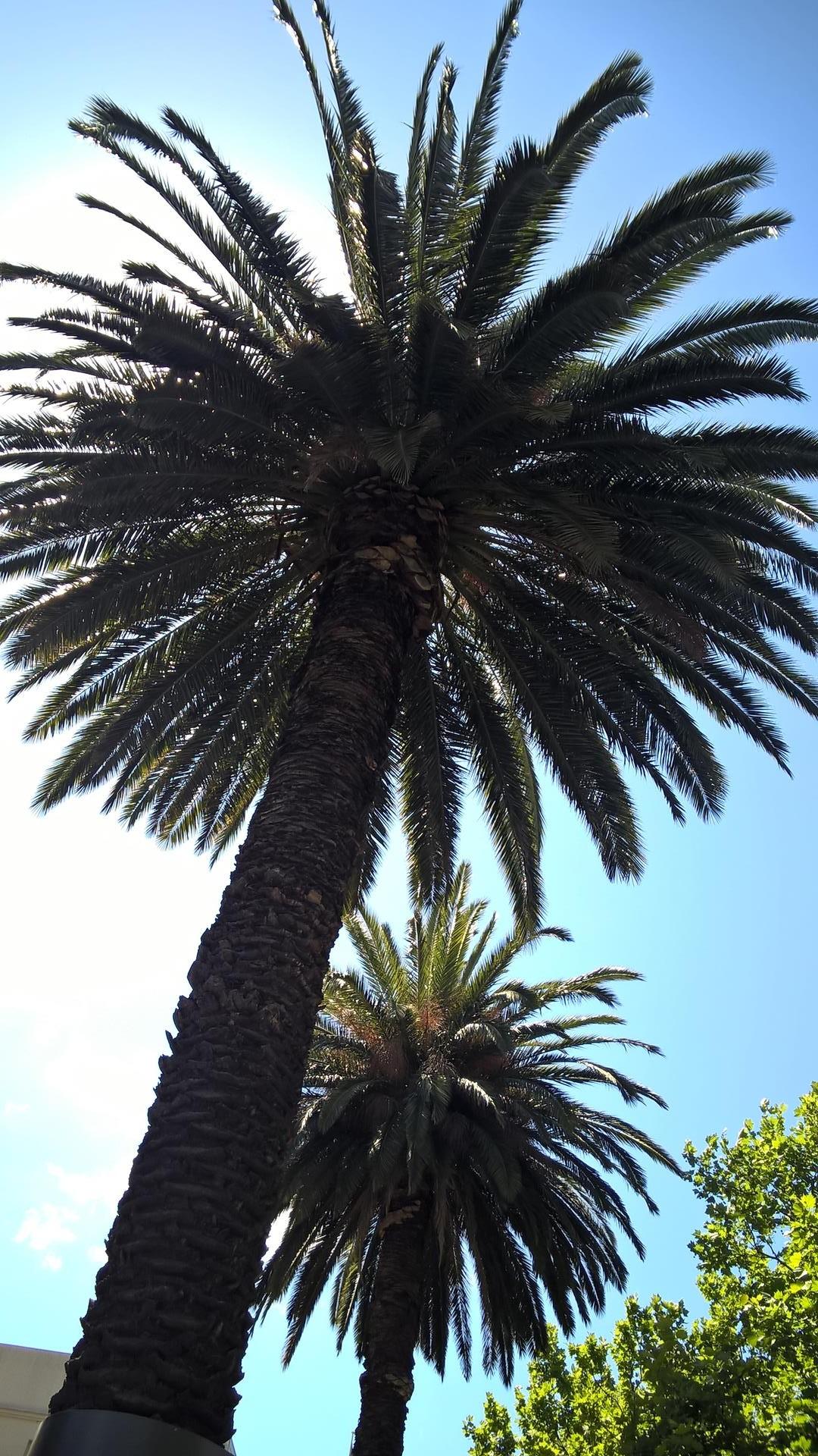 Palmen gibt es auch in Melbourne