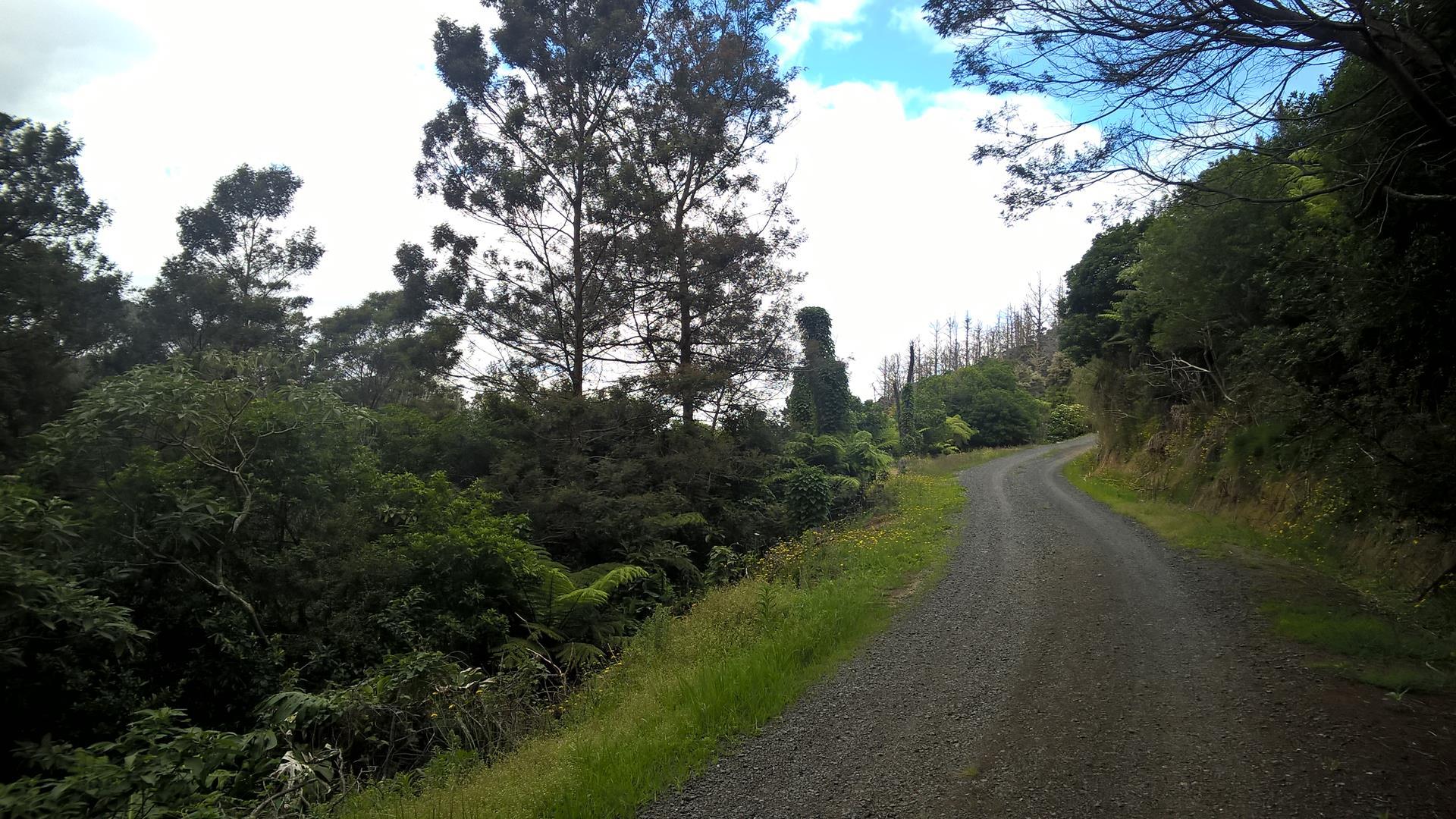 Auf dem Wanderweg nach Okiato