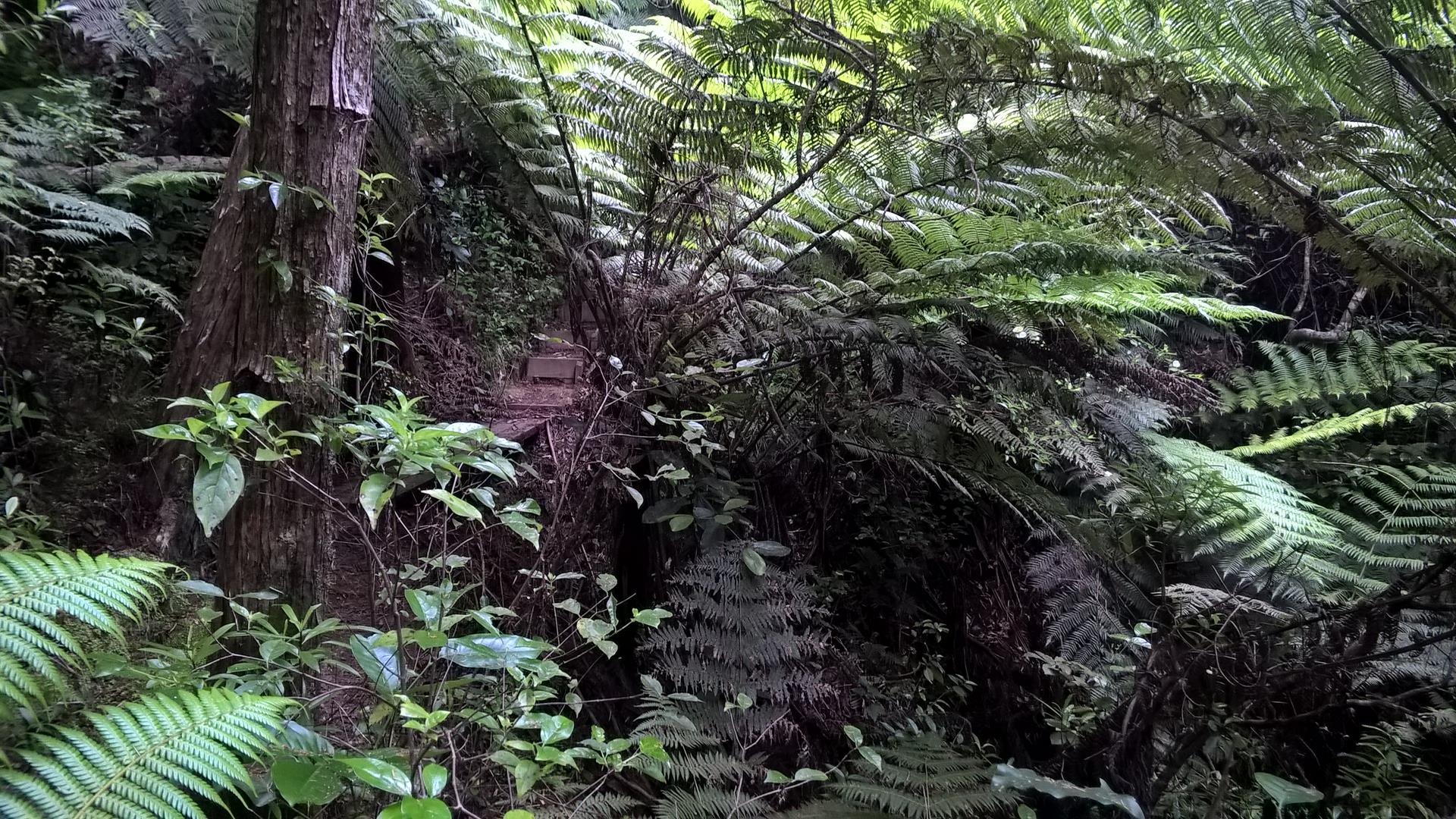... teils quer durch den Urwald...