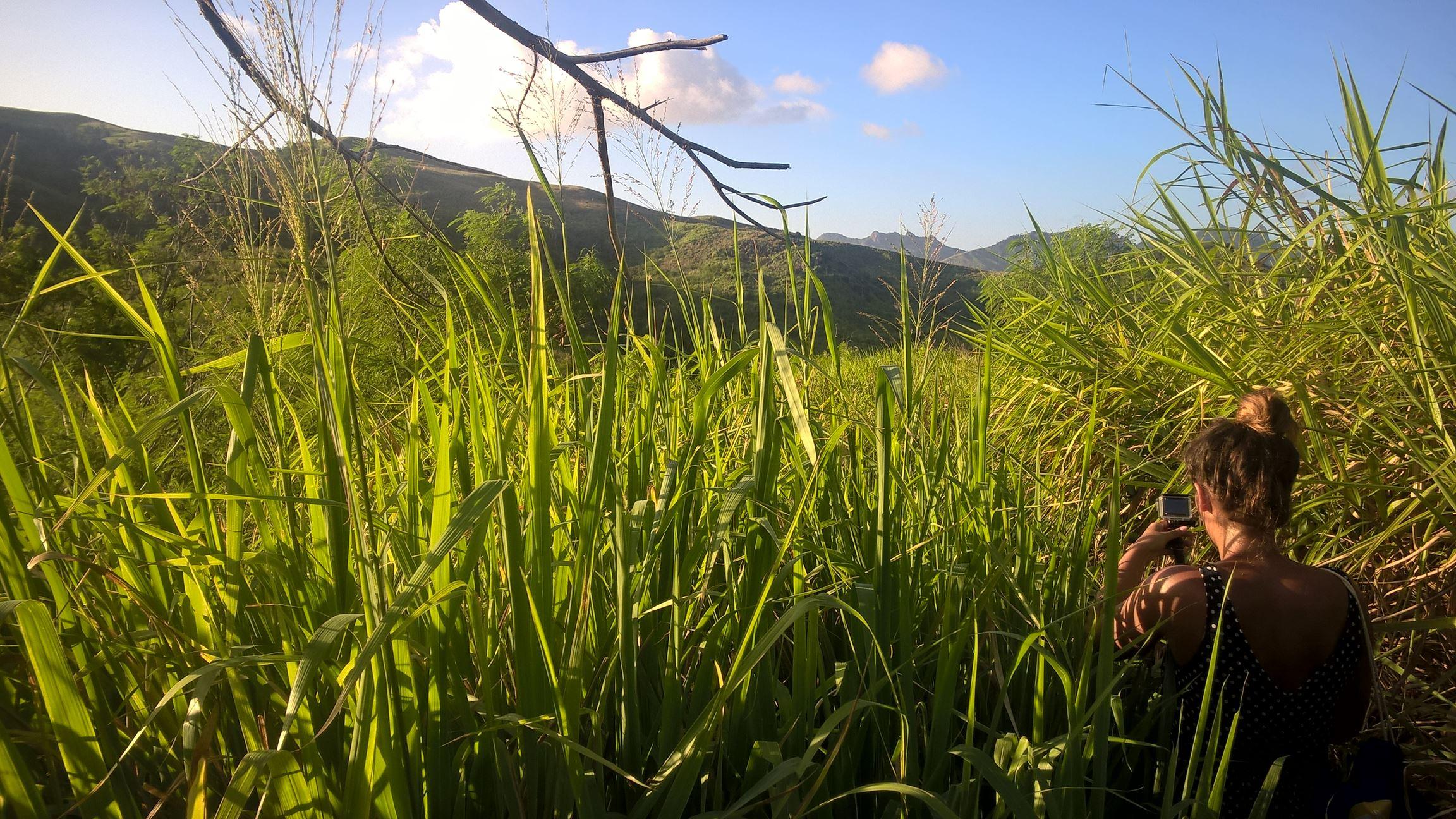 Durchs hohe Gras gehts weiter